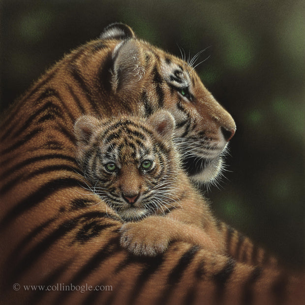 Tiger mother and cub painting art print by Collin Bogle.