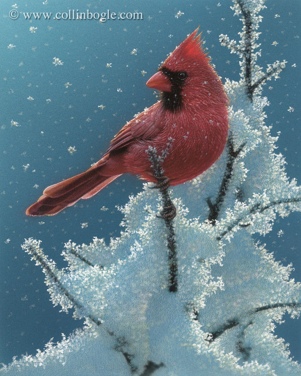 Cardinal perched on snow covered tree painting art print by Collin Bogle.