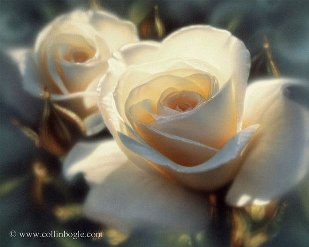 White roses painting art print by Collin Bogle.