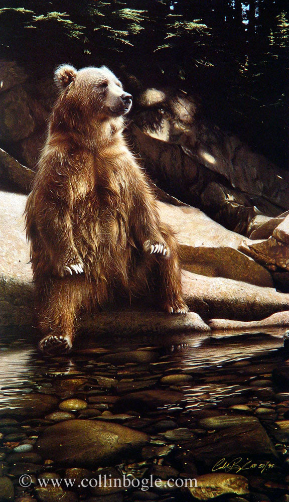 Brown bear sitting on edge of river painting art print by Collin Bogle.
