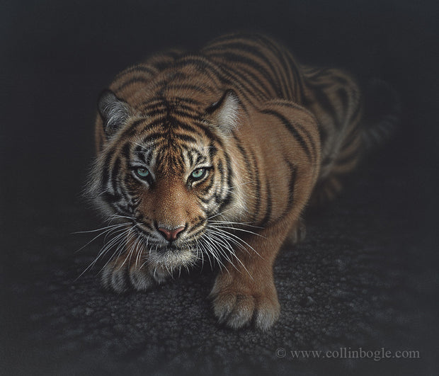 Crouching tiger painting art print by Collin Bogle.