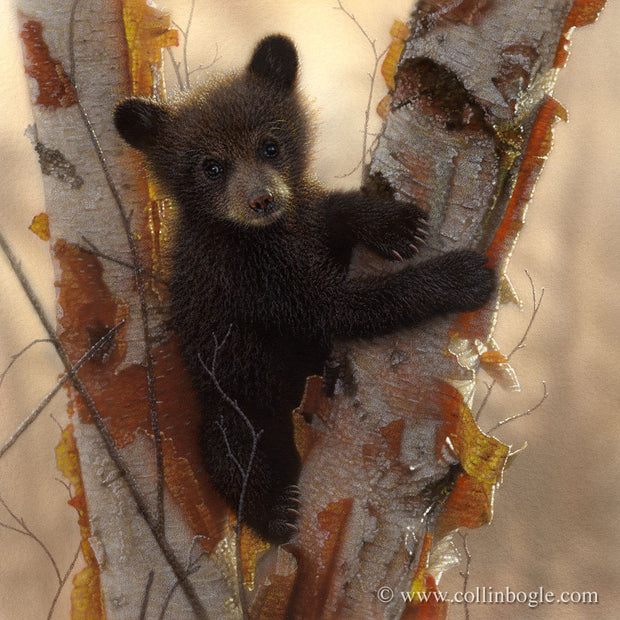 Black bear cub painting art print by Collin Bogle.