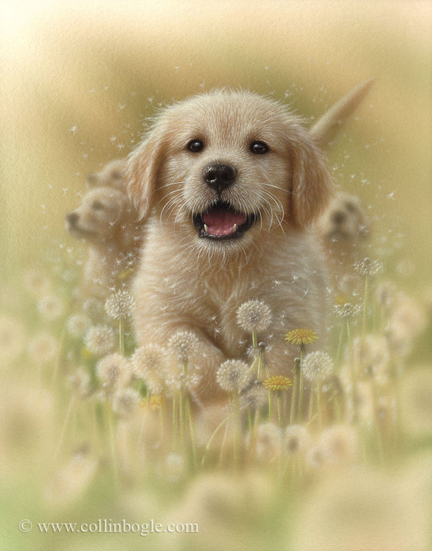 Golden retriever puppy running in dandelions painting art print.