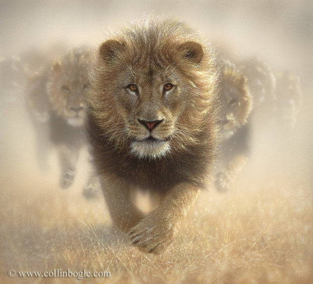 Running lions painting art print by Collin Bogle.