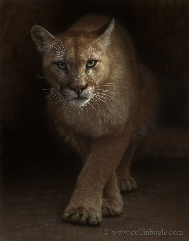 cougar prowling painting art print by Collin Bogle.