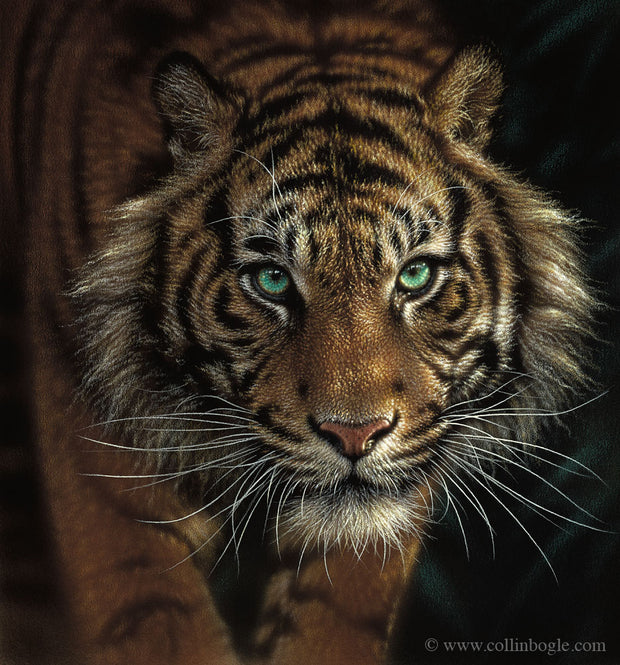Tiger painting art print by Collin Bogle.