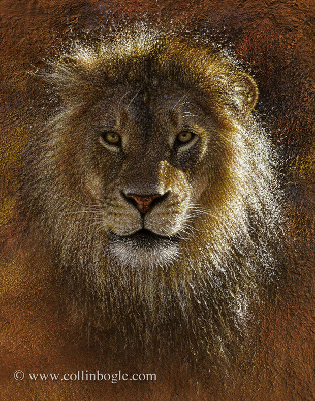 Lion portrait painting art print by Collin Bogle.