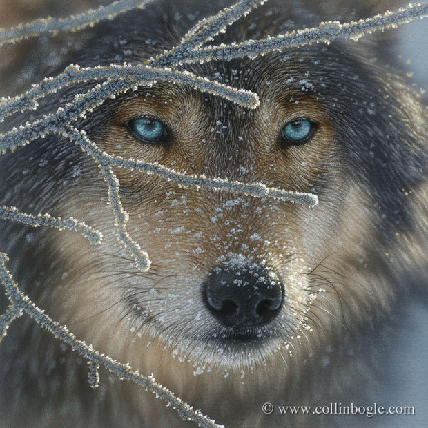 Wolf with icy branches painting art print by Collin Bogle.