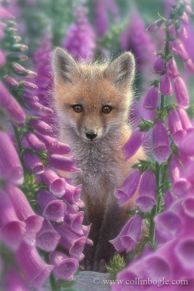 Red fox in foxglove flowers painting art print by Collin Bogle.