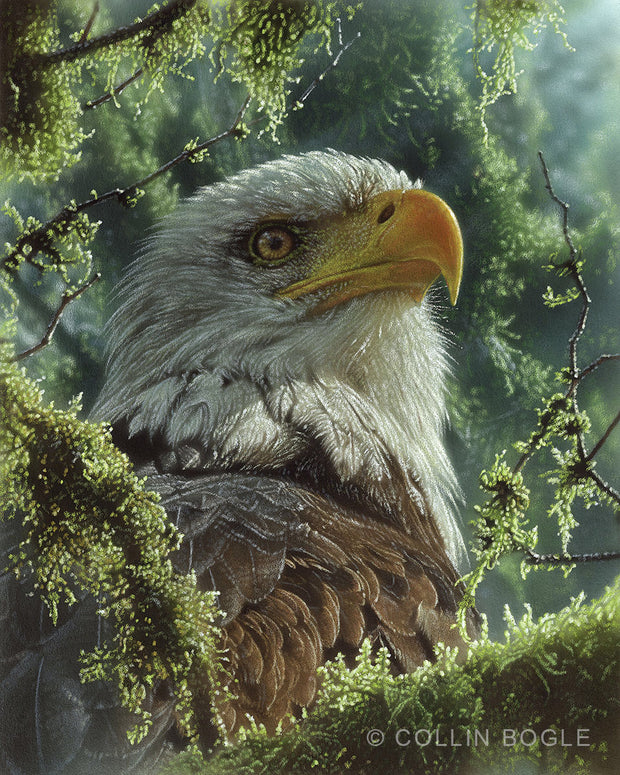 High and Mighty Bald Eagle Painting Art Print by Collin Bogle