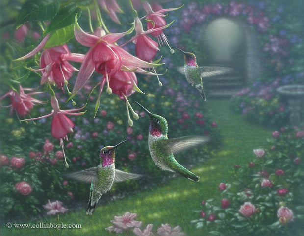 Hummingbirds with fuchsia flowers painting art print by Collin Bogle.