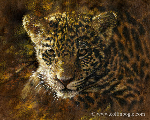 Jaguar cub painting art print by Collin Bogle.