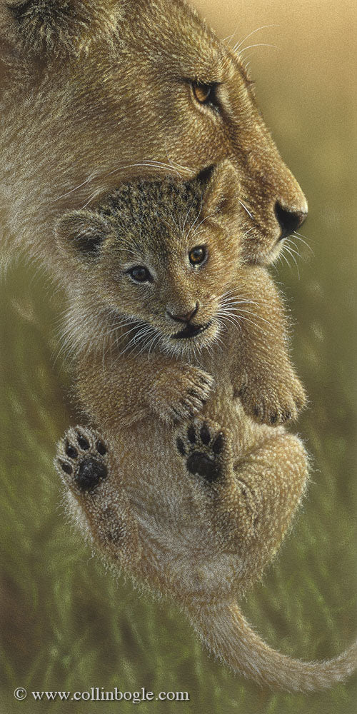 Lion cub in mother's mouth painting art print by Collin Bogle.