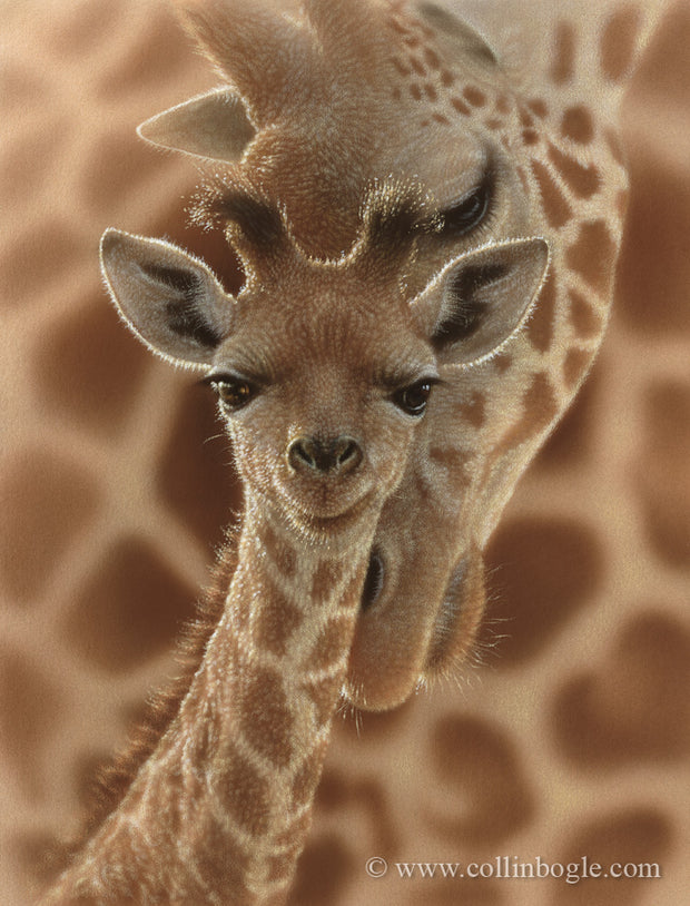 Baby giraffe with mother painting art print by Collin Bogle.