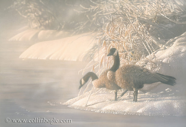 Canadian geese on frozen lake painting art print by Collin Bogle.
