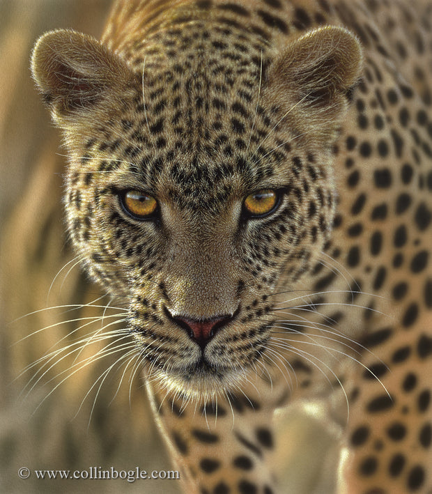 Leopard on the prowl painting art print by Collin Bogle.