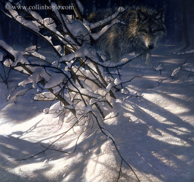 Wolf hidden behind snow covered branches painting art print by Collin Bogle.