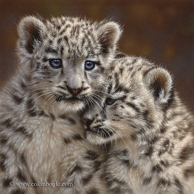 Snow leopard cubs painting art print by Collin Bogle.