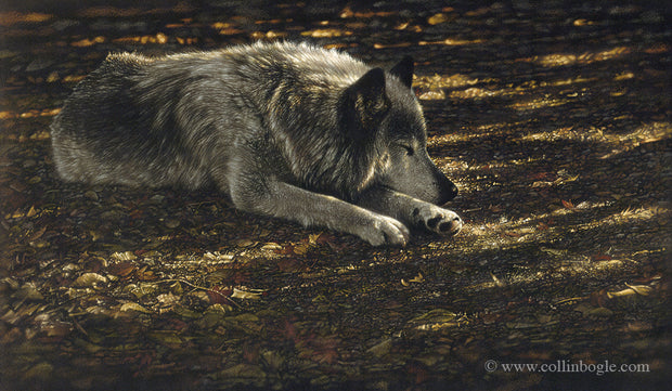 Resting wolf painting art print by Collin Bogle.