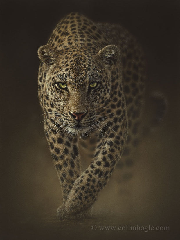 A leopard on the prowl painting art print by Collin Bogle.