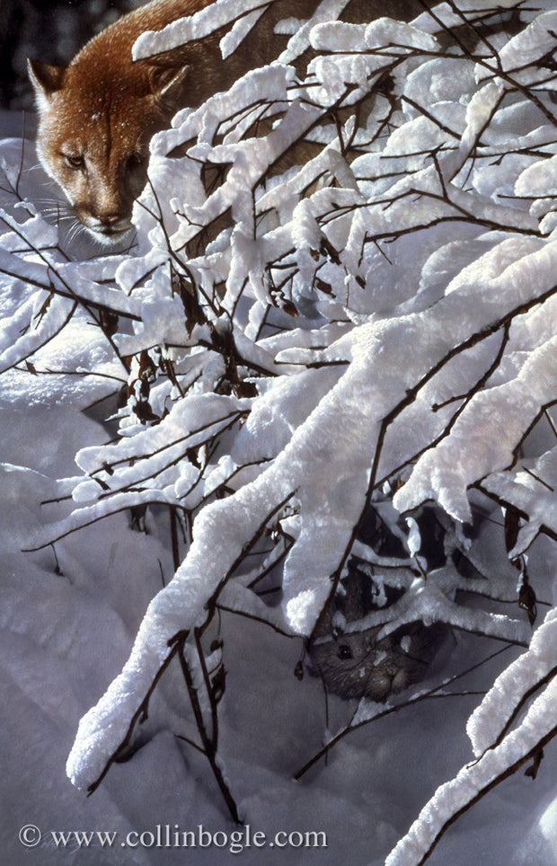 Cougar behind snow covered branches painting art print by Collin Bogle.