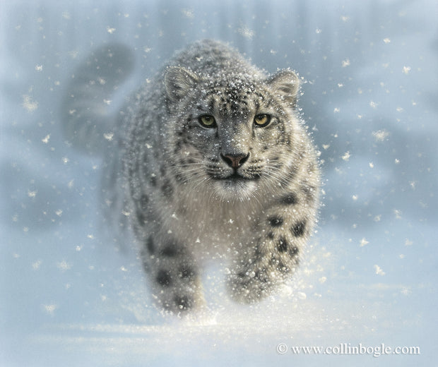 Snow leopard painting art print by Collin Bogle.