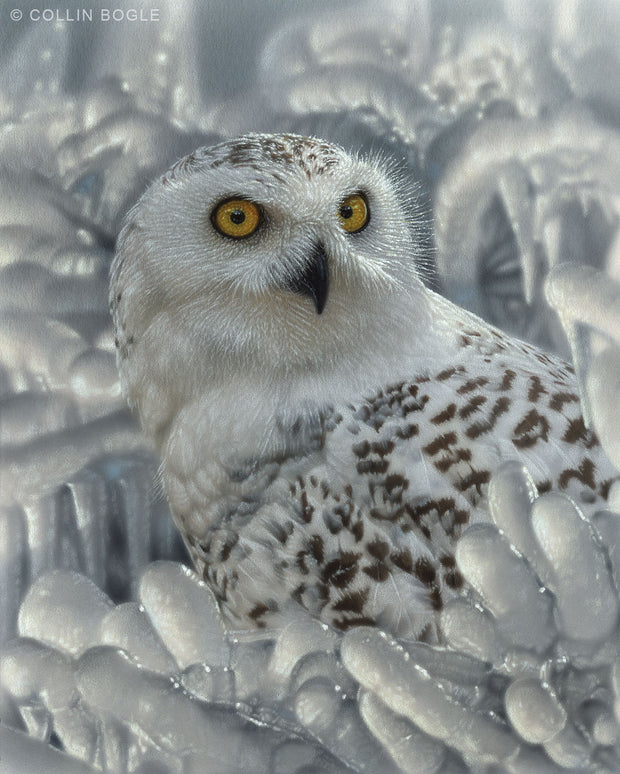 Snowy Owl Sanctuary Art Print Painting by Collin Bogle.