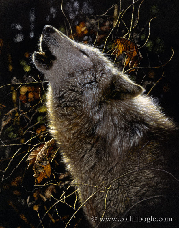 Wolf howling painting art print by Collin Bogle.
