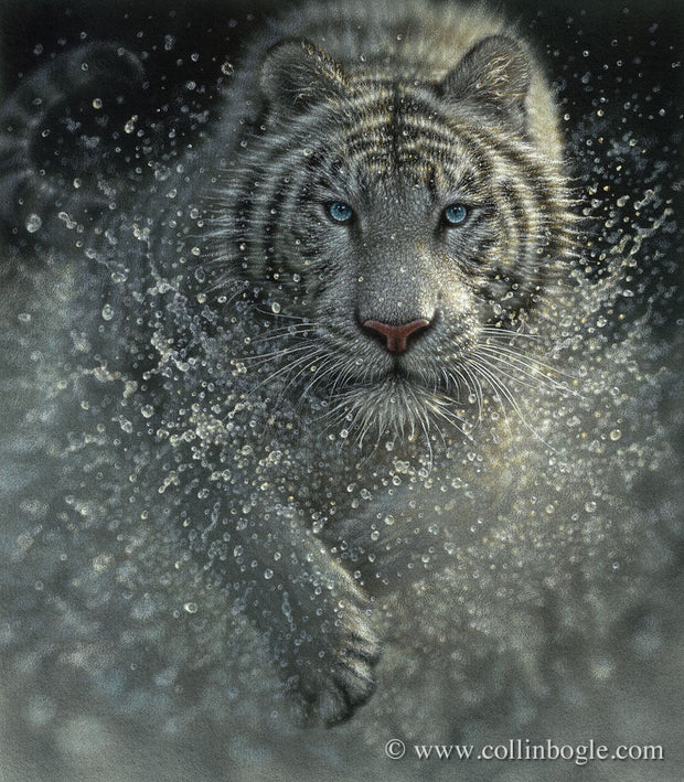 Wet & Wild - White Tiger
