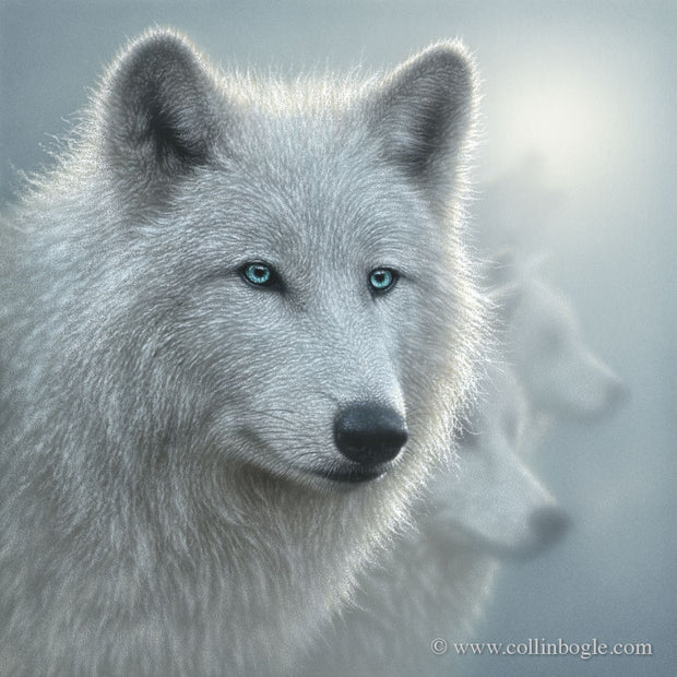 Whiteout - Arctic Wolves