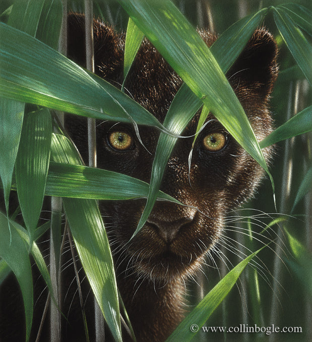 Wild Eyes - Black Panther