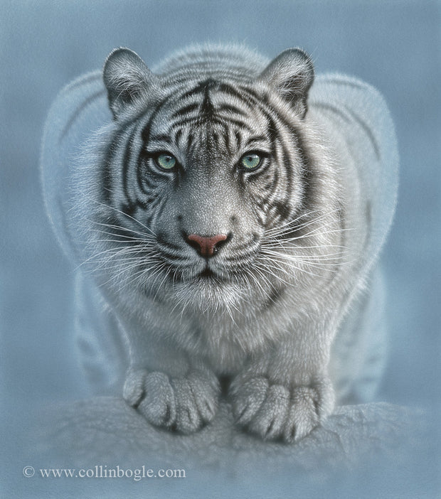 White tiger crouching painting art print.