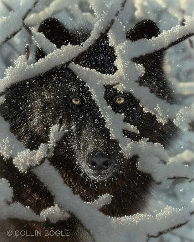Winter Black Wolf Painting Art Print by Collin Bogle.