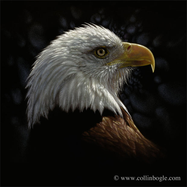 Bald eagle portrat painting art print by Collin Bogle.