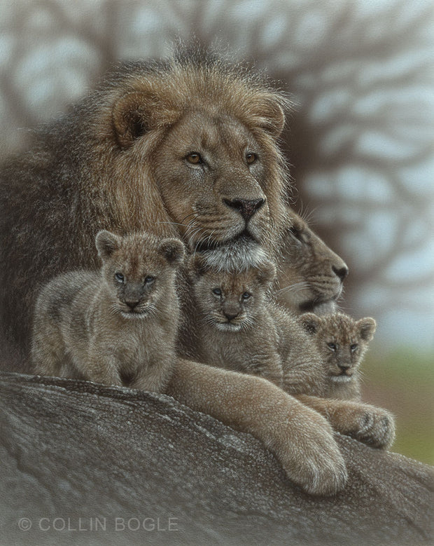 Lion family painting art print by Collin Bogle.