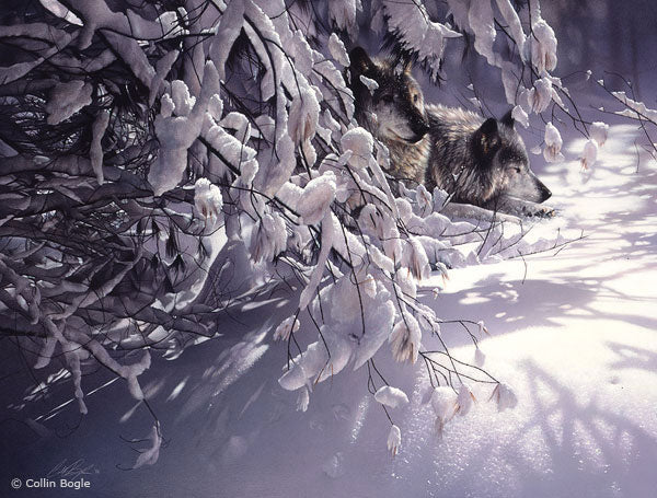 Wolves in snow painting art print by Collin Bogle.