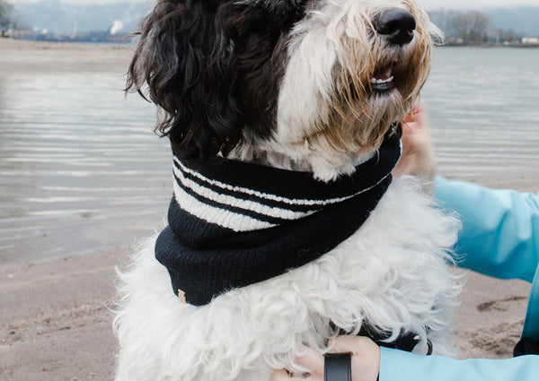 Cashmere Blend Scarf sets for Pets and their humans, Black and White