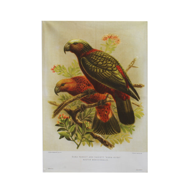 New Zealand Retro Tea Towel Kaka Parrot