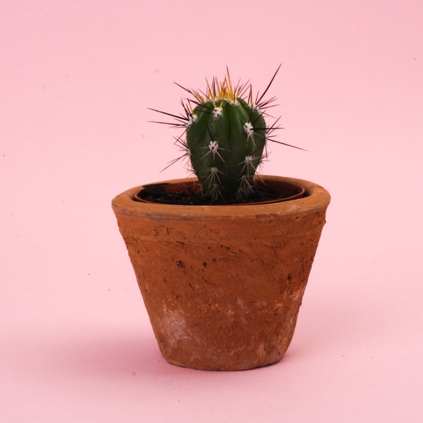 Redstone Taper Cactus Pot