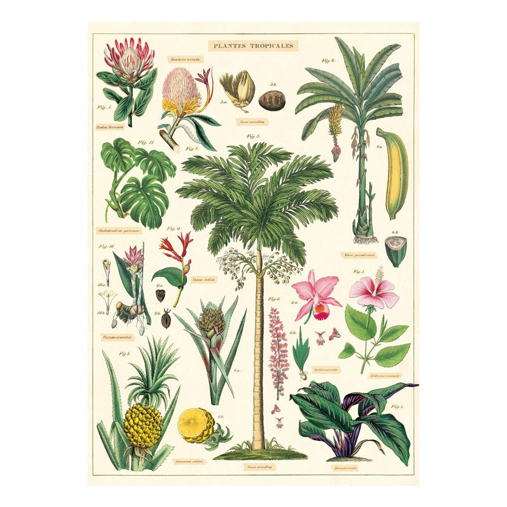 Cavallini Poster Tropical Plants
