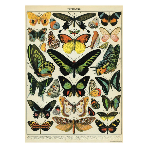 Cavallini Poster Butterfly Chart 1