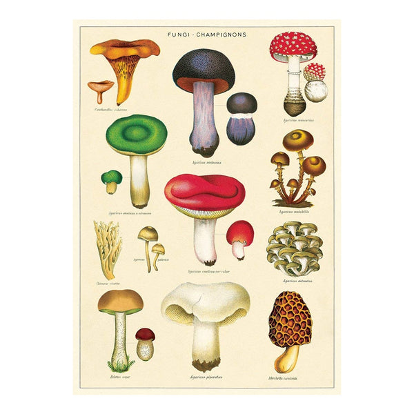 Cavallini Poster Mushrooms 2