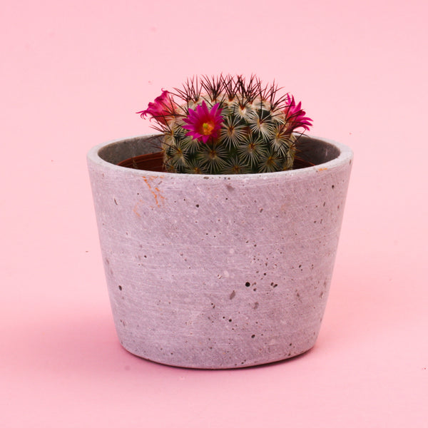 Concrete Taper Cactus Pot Smooth