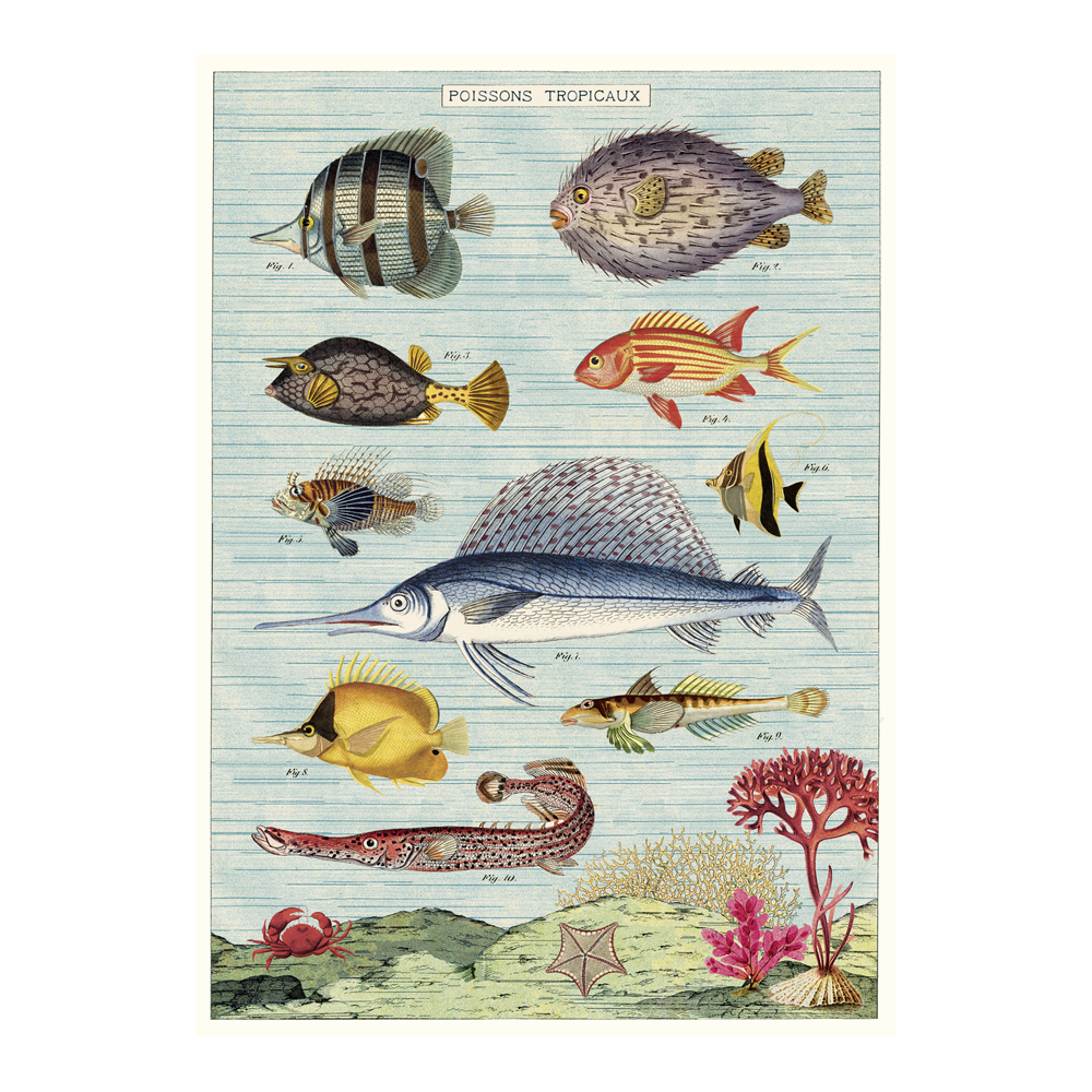 Cavallini Poster Tropical Fish