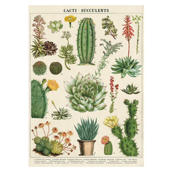 Cavallini Poster Cacti and Succulents