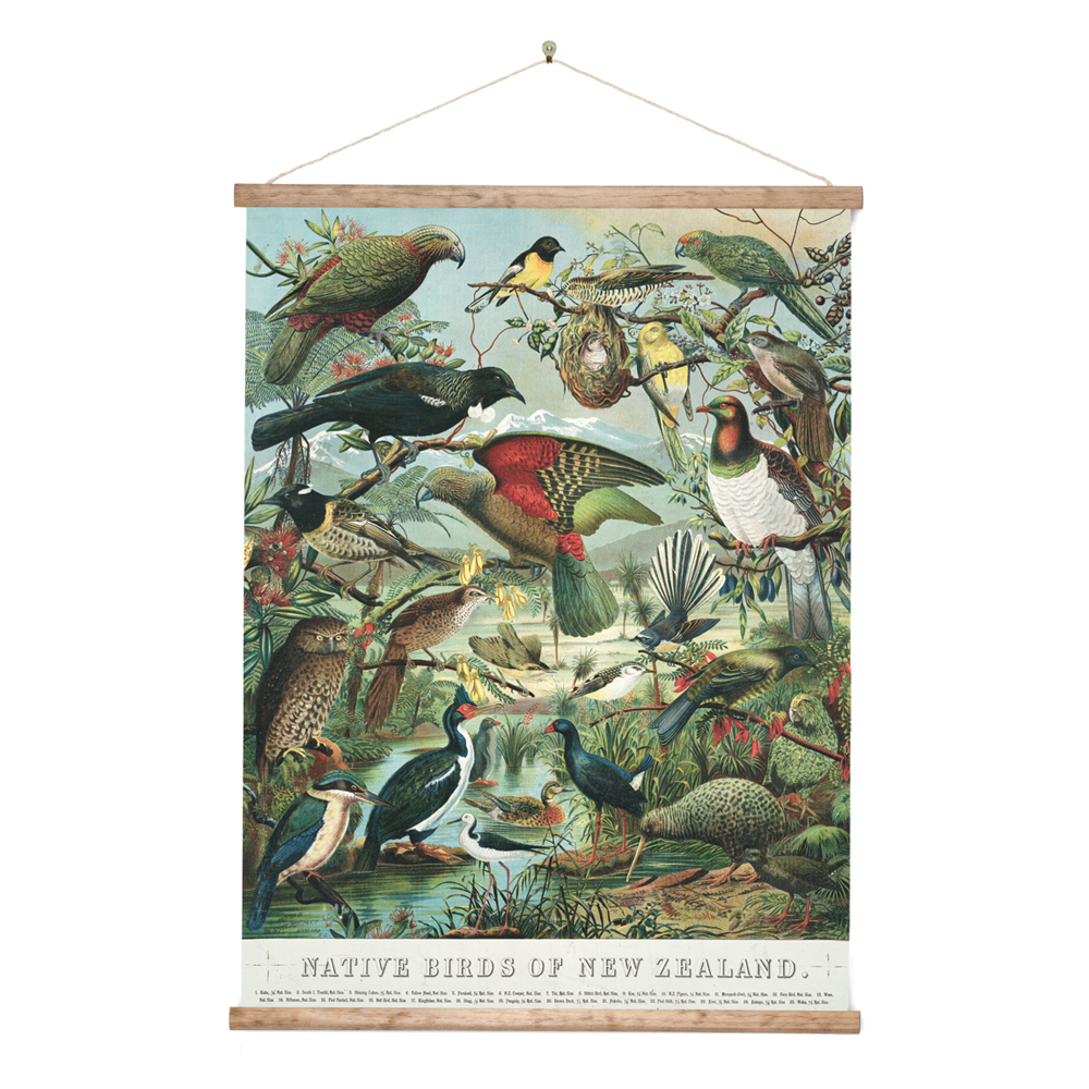 New Zealand Retro Wall Chart Native Birds of NZ