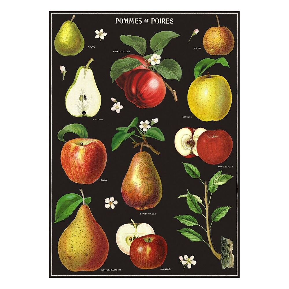 Cavallini Poster Apples and Pears