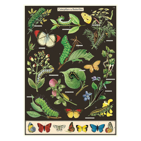 Cavallini Poster Caterpillars and Butterflies