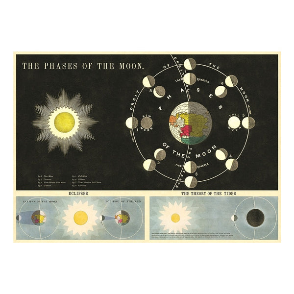 Cavallini Poster Phase of the Moon