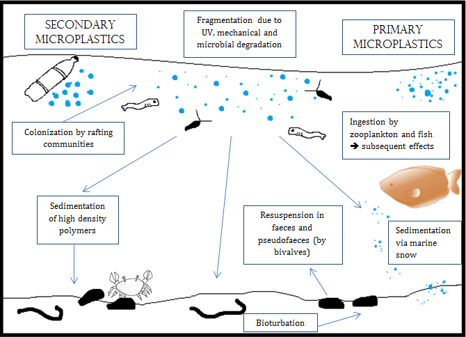 Microplastics_impact_on_biological_communities